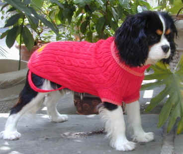 McCallum as pup in red coat