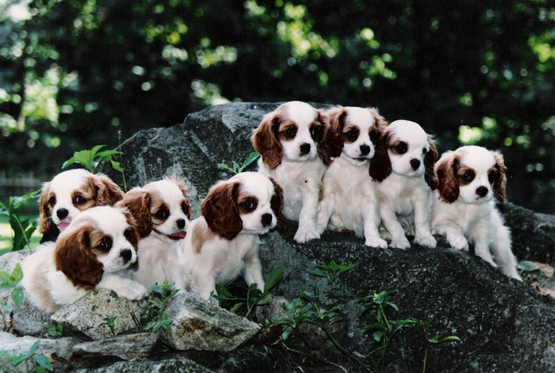 Chadwick 8 puppies on rocks