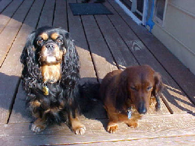 Kindle b/t and friend dachsie