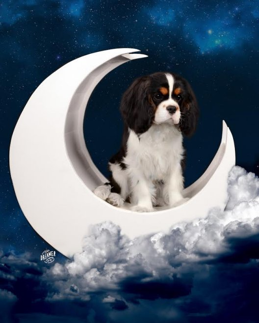O Neal in moon