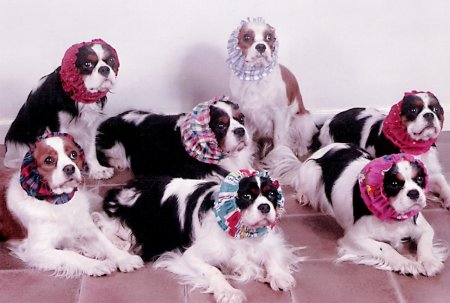 Cavalier group in snoods